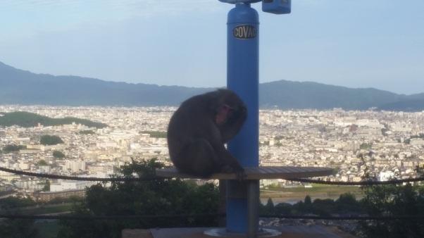 kyoto monkey.jpg