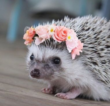 hedgehog flowers.jpg