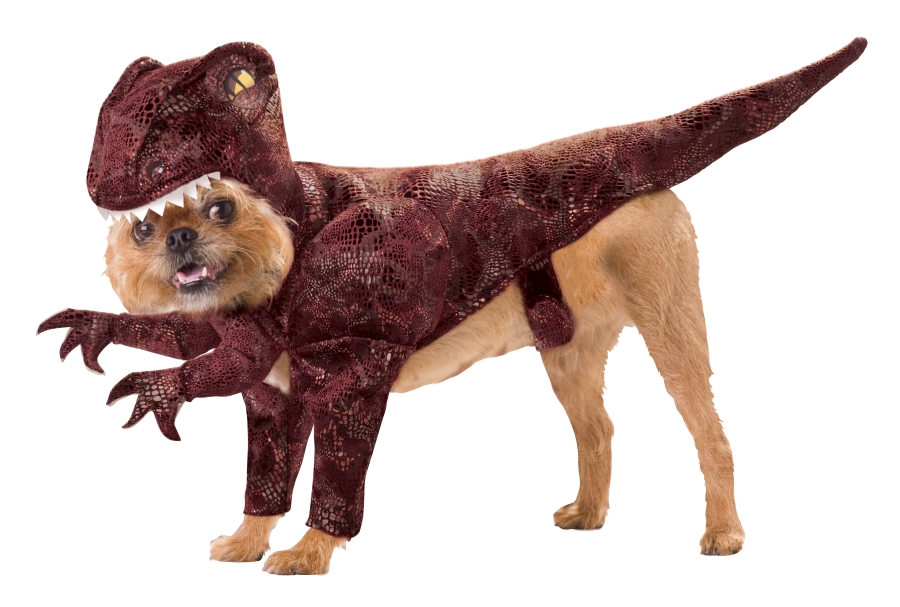 dog-halloween-costumes-raptor.jpg