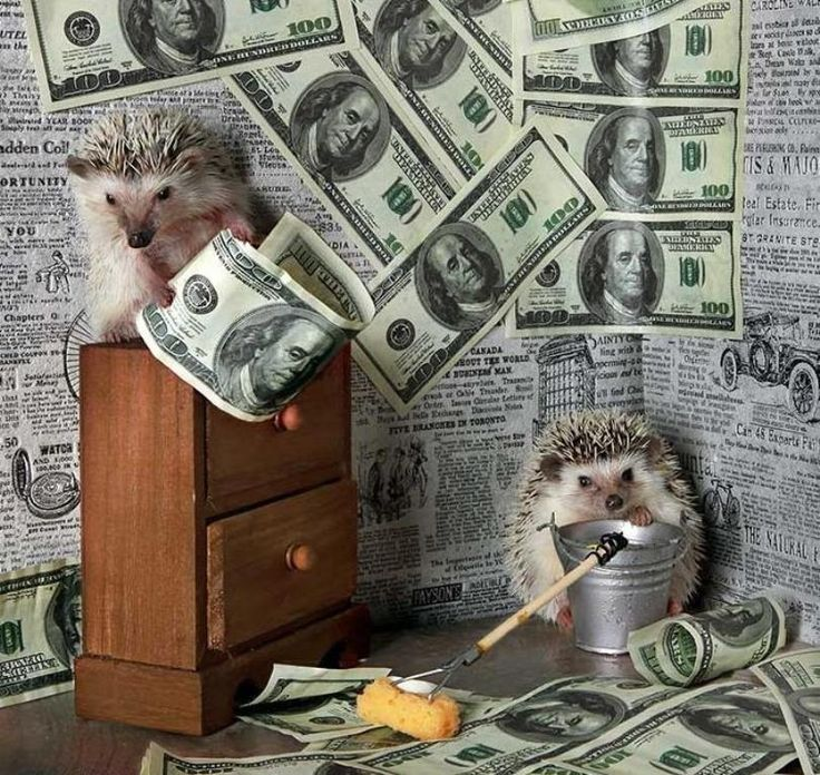 hedgehogs money