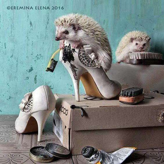 eremina hedgehog upgrade shoes