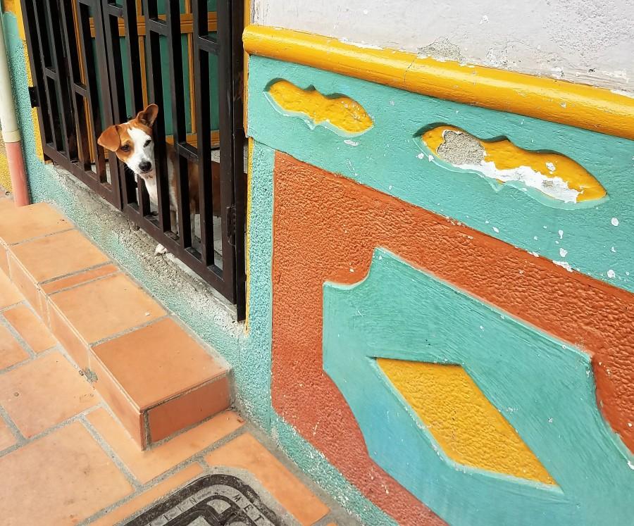 Guatape peeling walls
