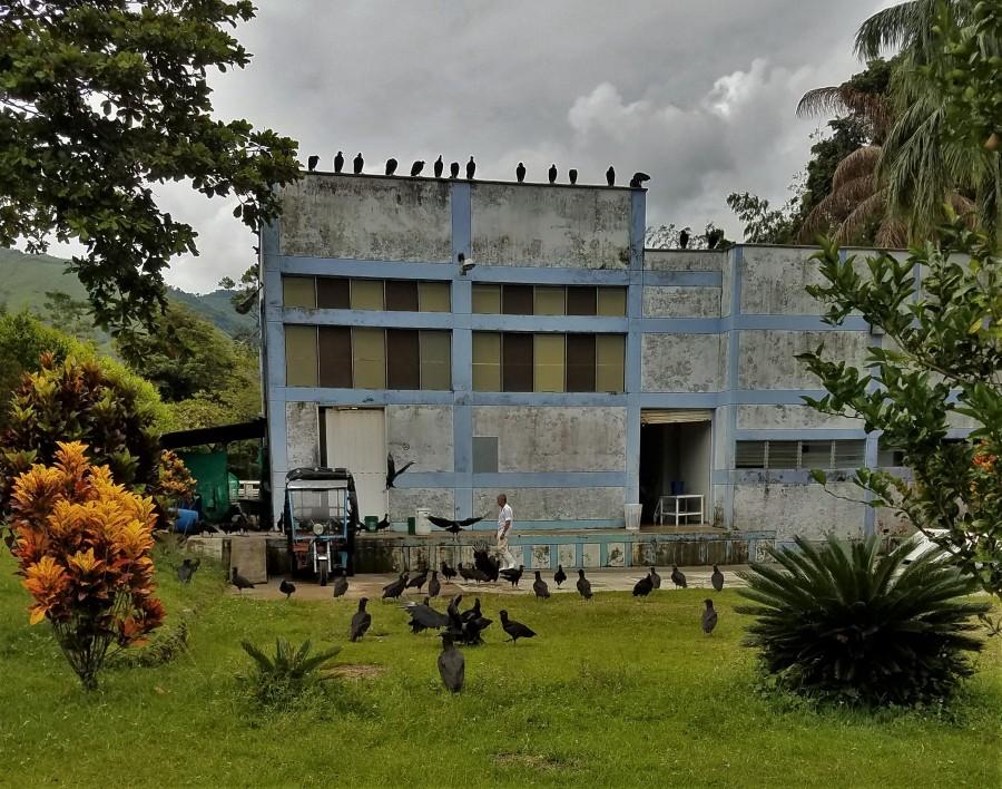 SanCa vultures